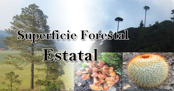 Superficie Forestal Estatal