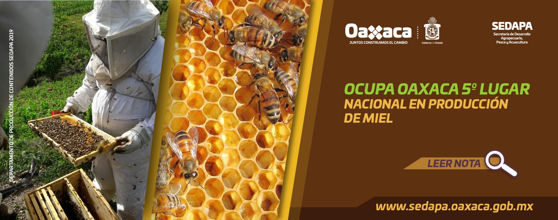 Oaxaca 5º Lugar a Nivel Nacional en Producción de Miel.