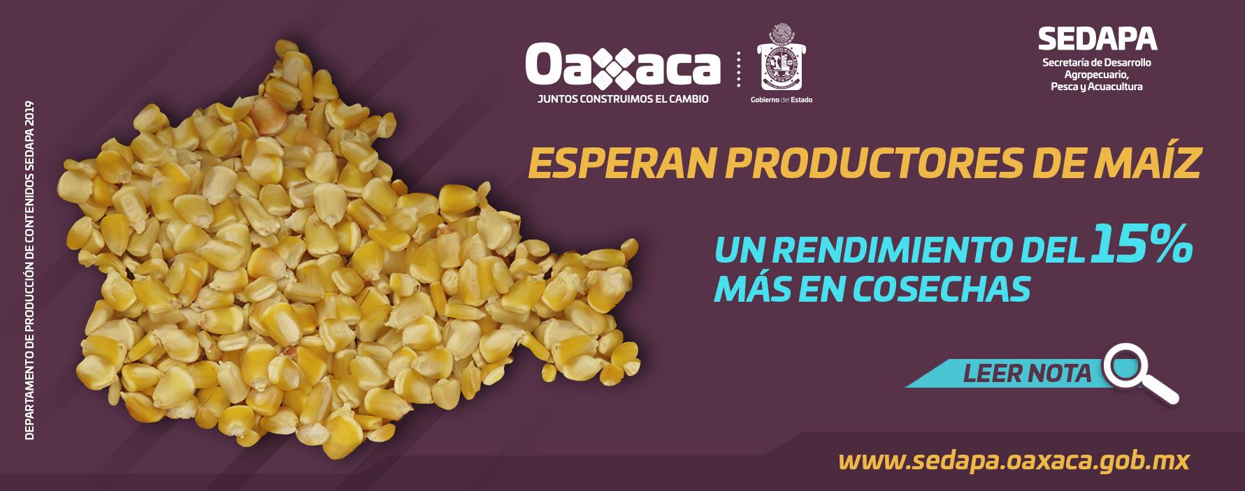 Esperan Productores de Maíz un Rendimiento del 15% más en Cosechas