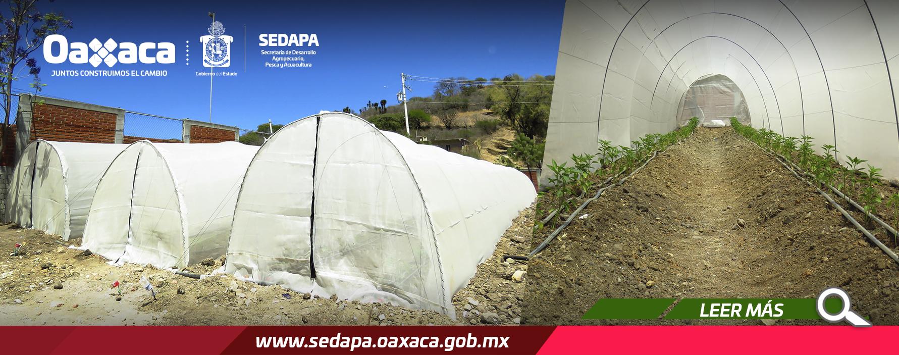 Fortalece Gobierno de Oaxaca actividades productivas de mujeres de San Bartolomé Quialana
