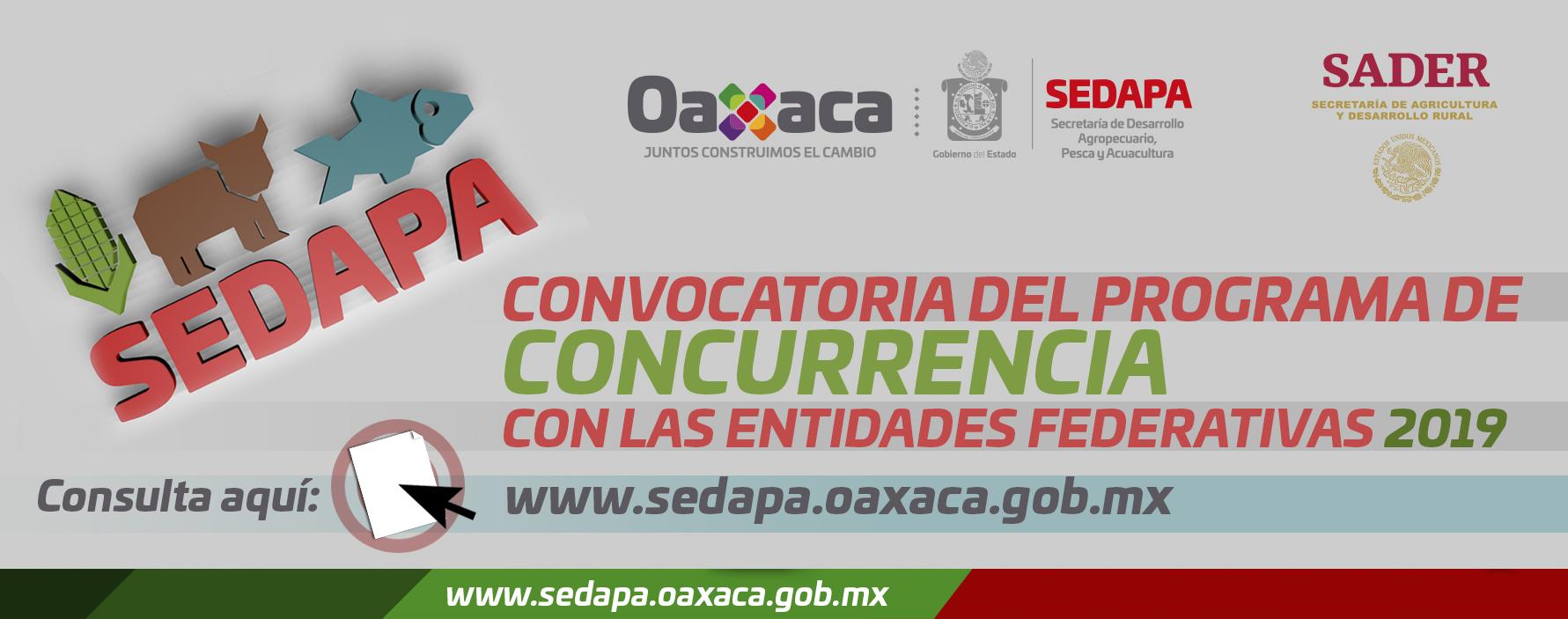 Convocatoria del Programa de Concurrencia con las Entidades Federativas 2019 y Formatos