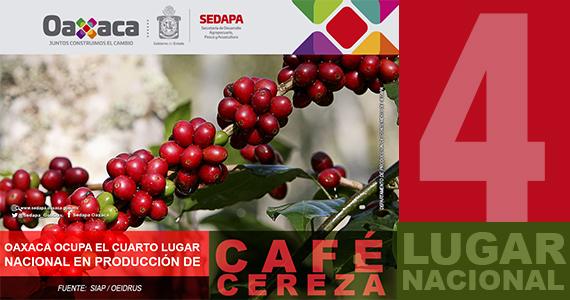 Oaxaca ocupa el cuarto lugar nacional en producción de Café Cereza