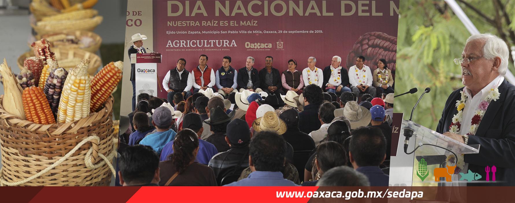 Gobierno de Oaxaca refrenda compromiso con el rescate y el crecimiento de la producción del maíz oaxaqueño