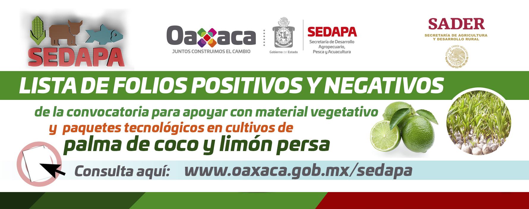 Lista de Folios Positivos y Negativos Coco Limón