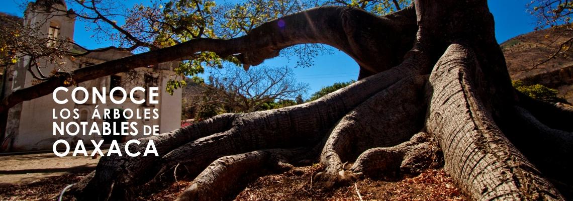 Árboles Notables de Oaxaca